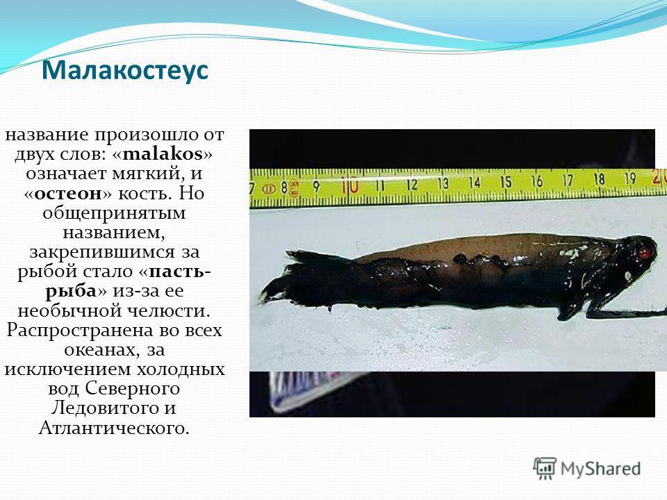 Малакостеус название произошло от двух слов: «malakos» означает мягкий, и «остеон» кость. Но общепринятым названием, закрепившимся за рыбой стало «пасть- рыба» из-за ее необычной челюсти. Распространена во всех океанах, за исключением холодных вод Се