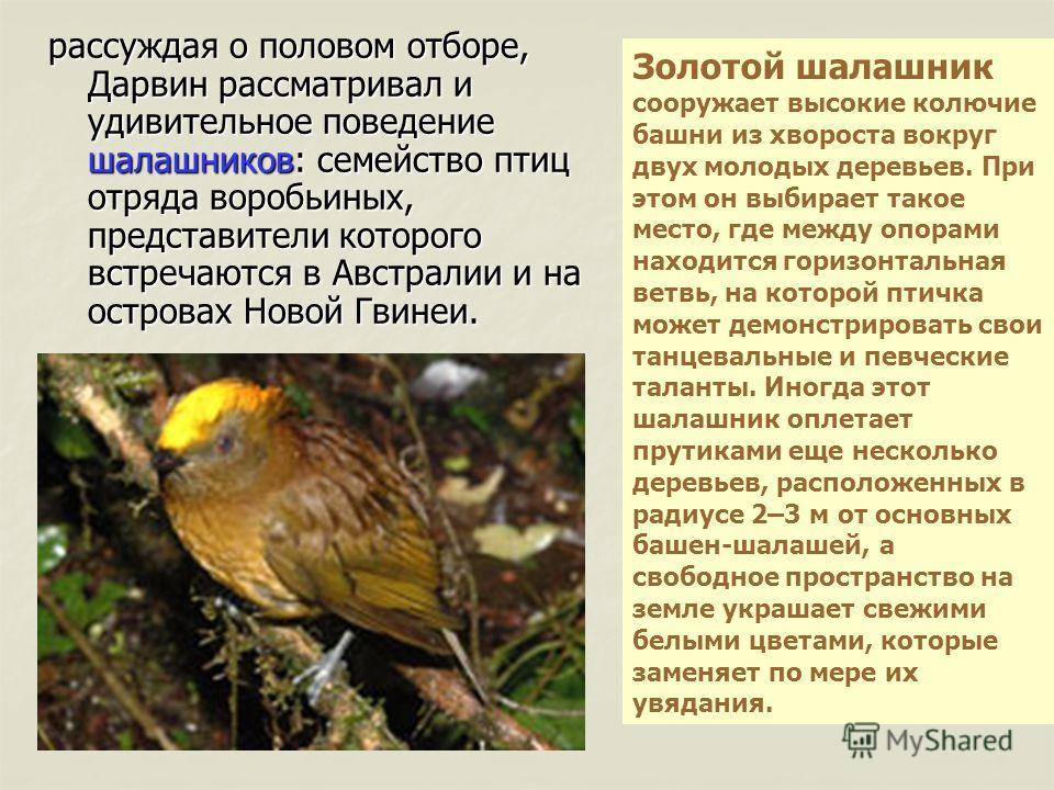 птиц отряда воробьиных