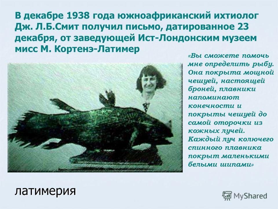 латимерия В декабре 1938 года южноафриканский ихтиолог Дж. Л.Б.Смит получил письмо, датированное 23 декабря, от заведующей Ист-Лондонским музеем мисс М. Кортенэ-Латимер «Вы сможете помочь мне определить рыбу. Она покрыта мощной чешуей, настоящей брон