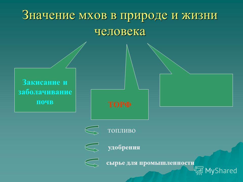 Значение мхов в природе и жизни человека Закисание и заболачивание почв ТОРФ топливо сырье для промышленности удобрения