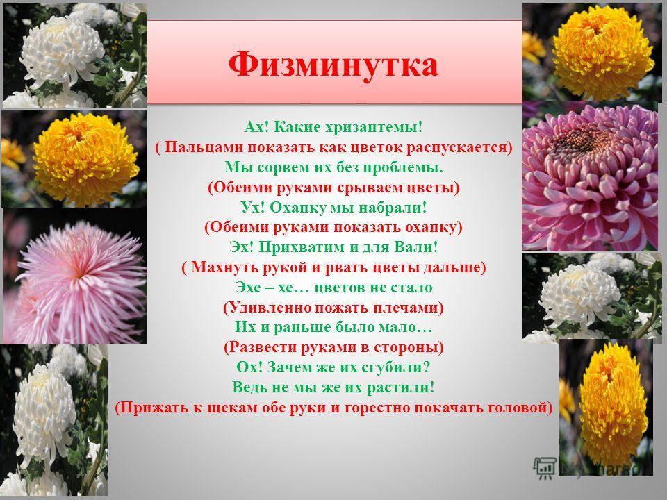 Физминутка Ах! Какие хризантемы! ( Пальцами показать как цветок распускается) Мы сорвем их без проблемы. (Обеими руками срываем цветы) Ух! Охапку мы набрали! (Обеими руками показать охапку) Эх! Прихватим и для Вали! ( Махнуть рукой и рвать цветы даль