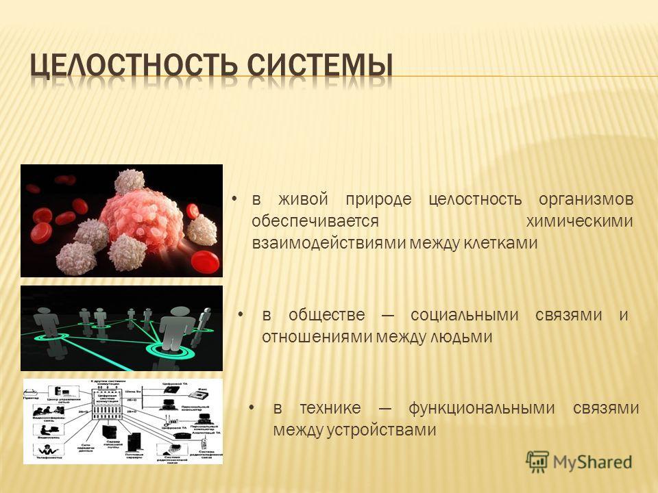 в живой природе целостность организмов обеспечивается химическими взаимодействиями между клетками в обществе социальными связями и отношениями между людьми в технике функциональными связями между устройствами