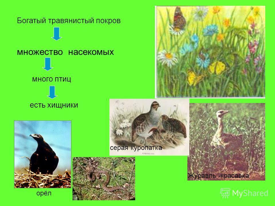 множество насекомых Богатый травянистый покров много птиц есть хищники Журавль -красавка серая куропатка орёл