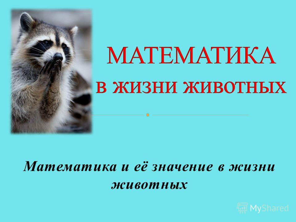Математика и её значение в жизни животных