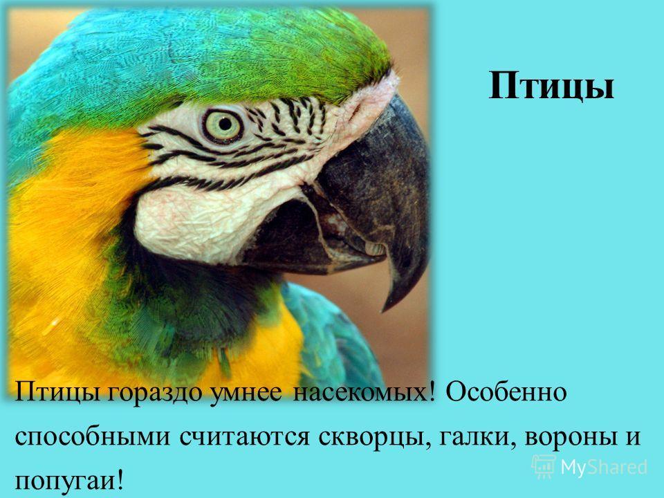 Птицы гораздо умнее насекомых! Особенно способными считаются скворцы, галки, вороны и попугаи!