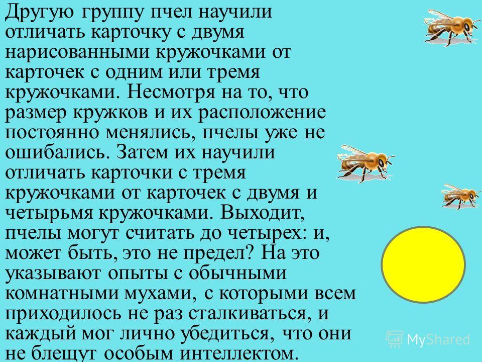 Другую группу пчел научили отличать карточку с двумя нарисованными кружочками от карточек с одним или тремя кружочками. Несмотря на то, что размер кружков и их расположение постоянно менялись, пчелы уже не ошибались. Затем их научили отличать карточк