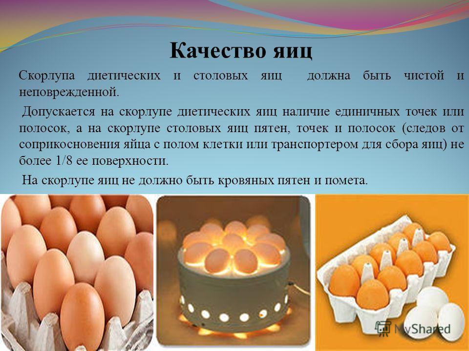 Качество яиц Скорлупа диетических и столовых яиц должна быть чистой и неповрежденной. Допускается на скорлупе диетических яиц наличие единичных точек или полосок, а на скорлупе столовых яиц пятен, точек и полосок (следов от соприкосновения яйца с пол