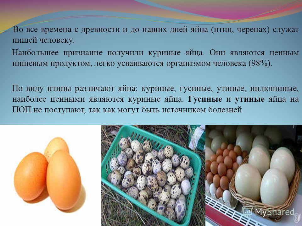 Во все времена с древности и до наших дней яйца (птиц, черепах) служат пищей человеку. Наибольшее признание получили куриные яйца. Они являются ценным пищевым продуктом, легко усваиваются организмом человека (98%). По виду птицы различают яйца: курин