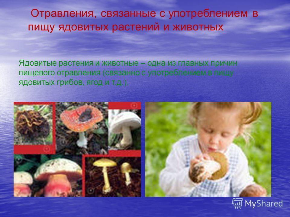 Ядовитые растения и животные – одна из главных причин пищевого отравления (связанно с употреблением в пищу ядовитых грибов, ягод и т.д.). Отравления, связанные с употреблением в пищу ядовитых растений и животных