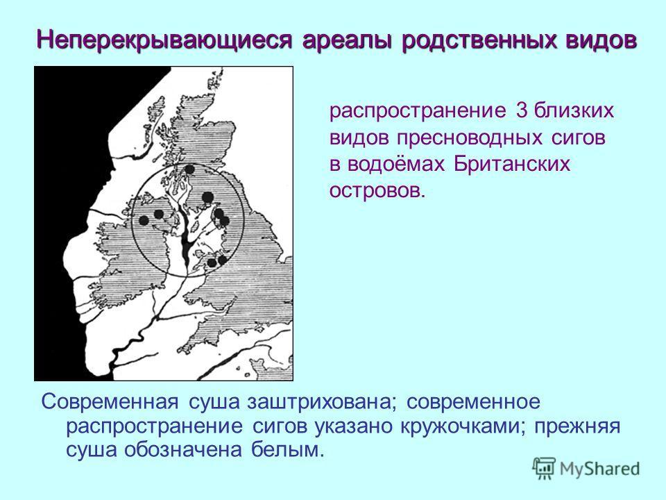 Современная суша заштрихована; современное распространение сигов указано кружочками; прежняя суша обозначена белым. распространение 3 близких видов пресноводных сигов в водоёмах Британских островов. Неперекрывающиеся ареалы родственных видов