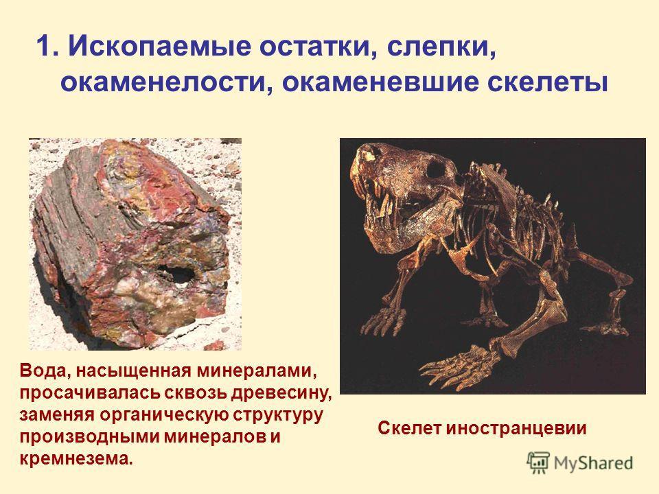 1. Ископаемые остатки, слепки, окаменелости, окаменевшие скелеты Вода, насыщенная минералами, просачивалась сквозь древесину, заменяя органическую структуру производными минералов и кремнезема. Скелет иностранцевии