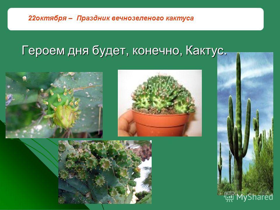 Героем дня будет, конечно, Кактус. 22октября – Праздник вечнозеленого кактуса
