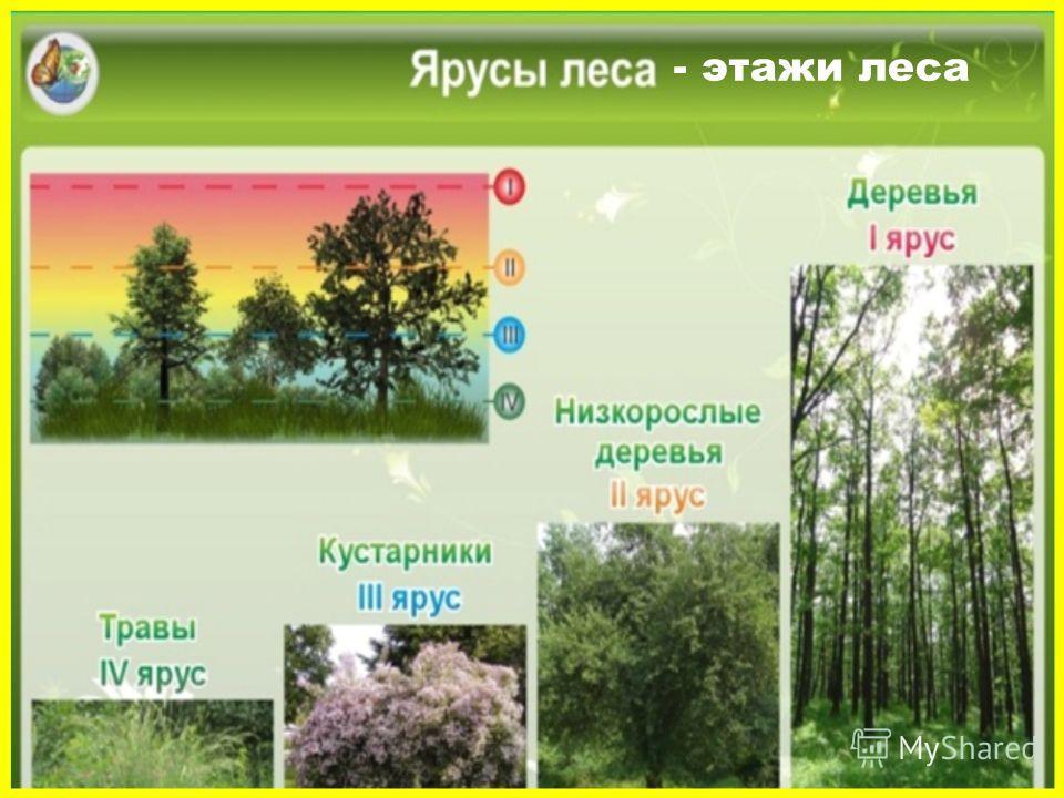 - этажи леса