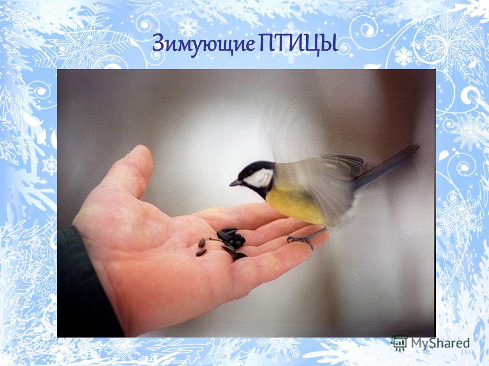 Зимующие птицы картинки воронеж