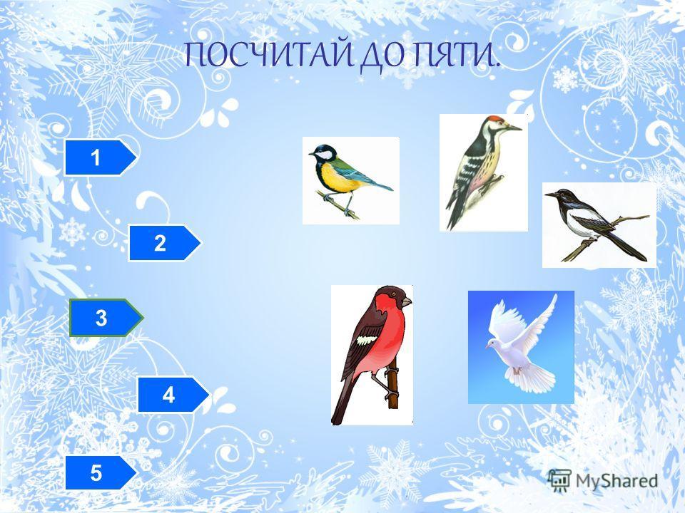 Отгадайте загадки Спинкою зеленовата, Животиком желтовата, Чёрненькая шапочка И полоска шарфика. Красногрудый, чернокрылый, Любит зёрнышки клевать, С первым снегом на рябине Он появится опять. Непоседа пёстрая, Птица длиннохвостая, Птица говорливая,
