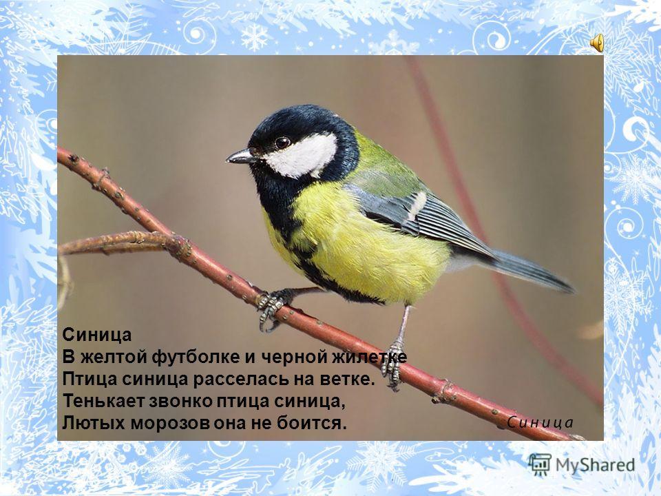 Птицей мира он зовется. С крыш стрелой к земле несется, Если видит гору крошек. Сизый, белый и хороший.