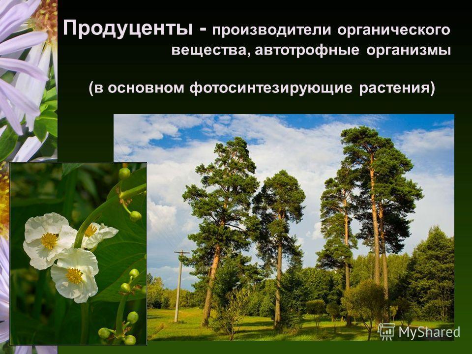 Продуценты - производители органического вещества, автотрофные организмы (в основном фотосинтезирующие растения)