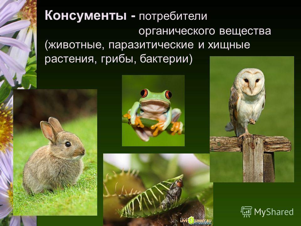 Консументы - потребители органического вещества (животные, паразитические и хищные растения, грибы, бактерии)