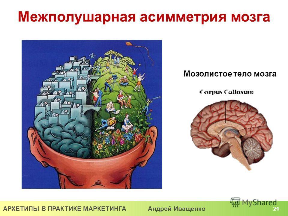 АРХЕТИПЫ В ПРАКТИКЕ МАРКЕТИНГА Андрей Иващенко 24 Межполушарная асимметрия мозга Мозолистое тело мозга