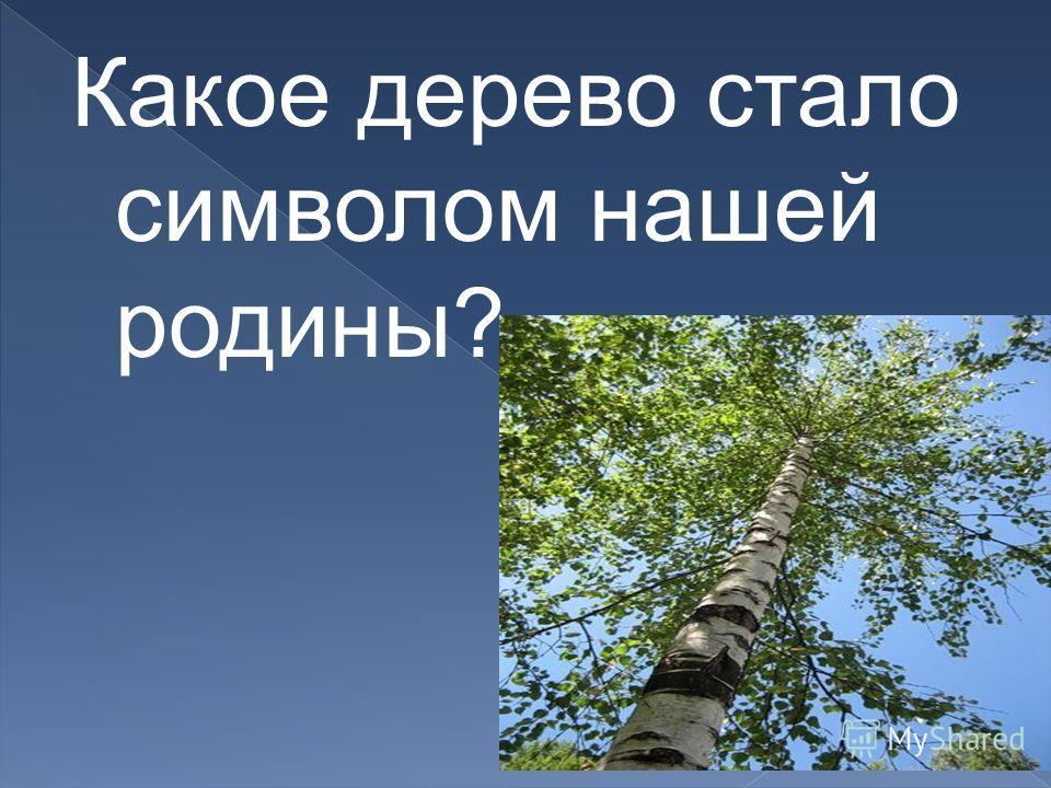 Какое дерево стало символом нашей родины?