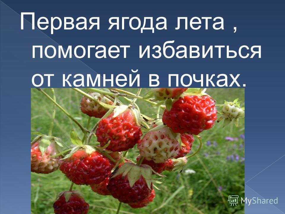 Первая ягода лета, помогает избавиться от камней в почках.