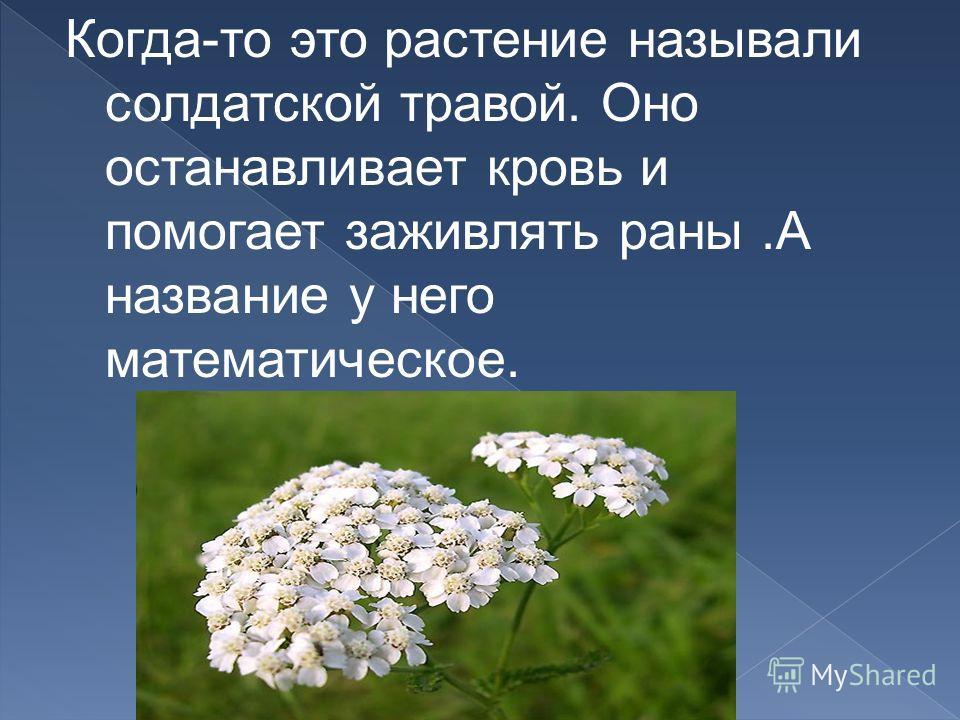 Когда-то это растение называли солдатской травой. Оно останавливает кровь и помогает заживлять раны.А название у него математическое.