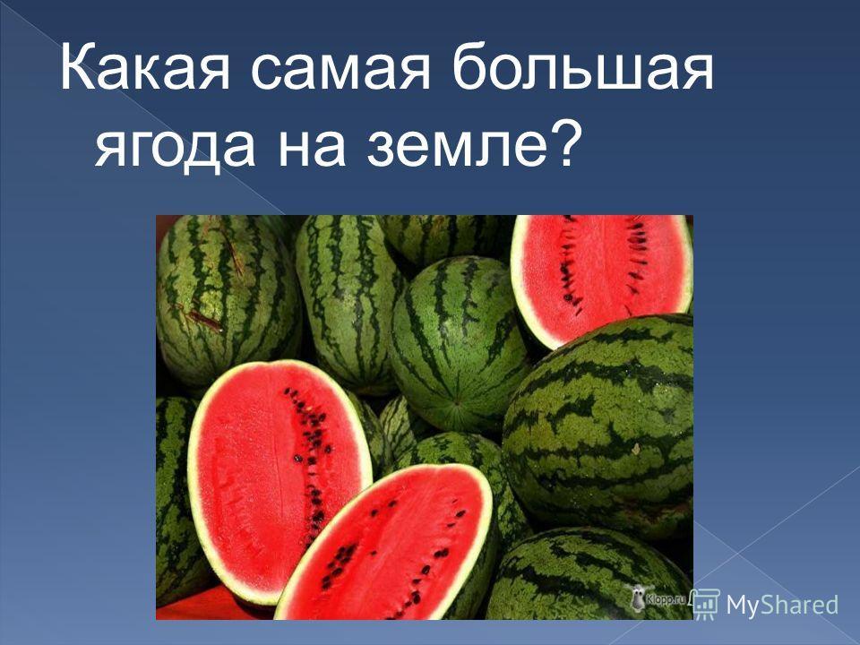 Какая самая большая ягода на земле?