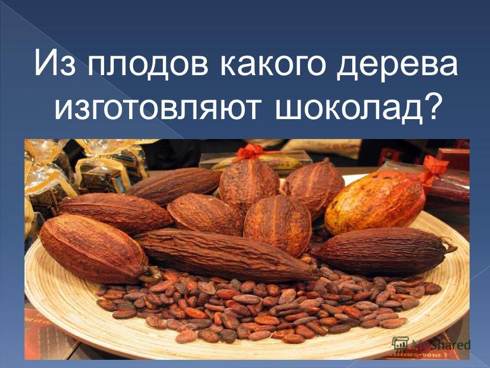 Из плодов какого дерева изготовляют шоколад?