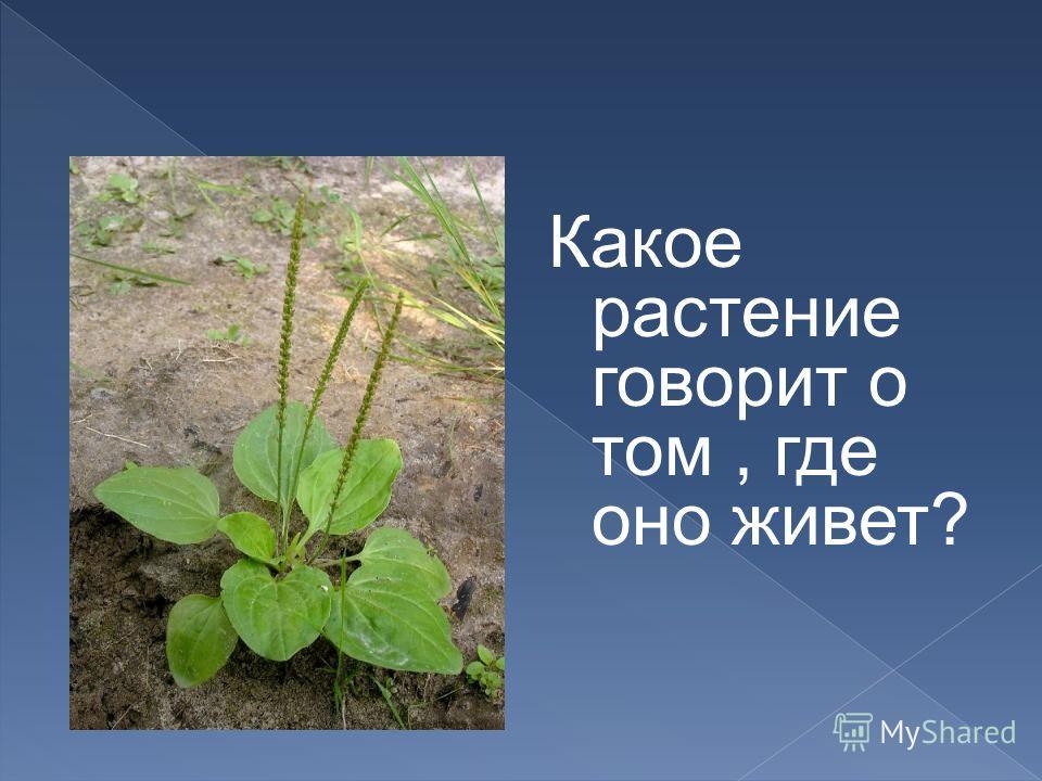 Какое растение говорит о том, где оно живет?
