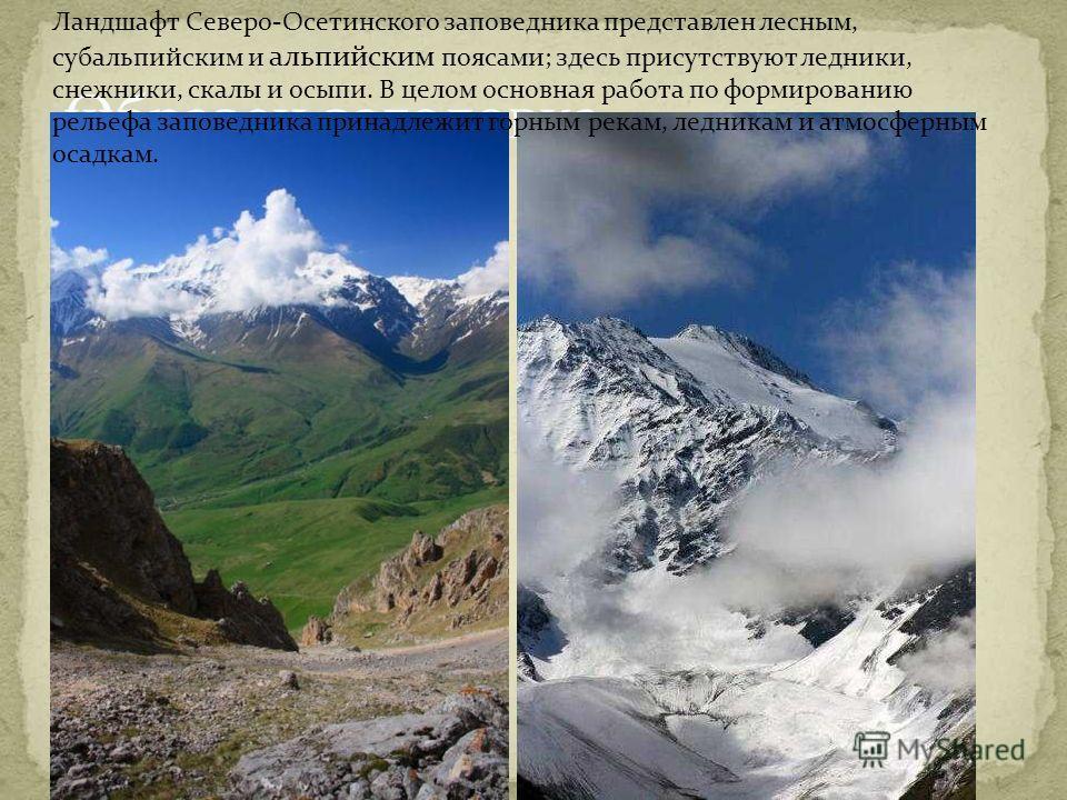 Образец заголовкачч Ландшафт Северо-Осетинского заповедника представлен лесным, субальпийским и альпийским поясами; здесь присутствуют ледники, снежники, скалы и осыпи. В целом основная работа по формированию рельефа заповедника принадлежит горным ре