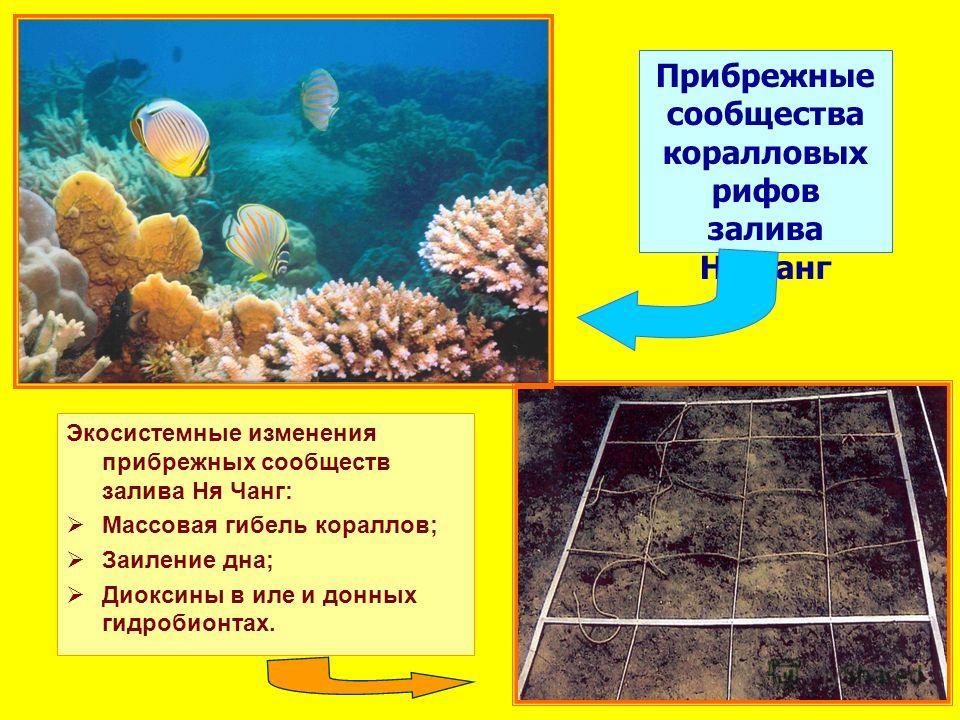Прибрежные сообщества коралловых рифов залива Ня Чанг Экосистемные изменения прибрежных сообществ залива Ня Чанг: Массовая гибель кораллов; Заиление дна; Диоксины в иле и донных гидробионтах.