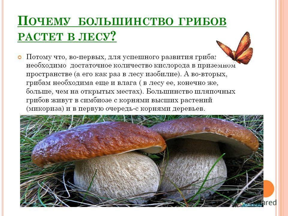 П ОЧЕМУ БОЛЬШИНСТВО ГРИБОВ РАСТЕТ В ЛЕСУ ? Потому что, во-первых, для успешного развития грибам необходимо достаточное количество кислорода в приземном пространстве (а его как раз в лесу изобилие). А во-вторых, грибам необходима еще и влага ( в лесу