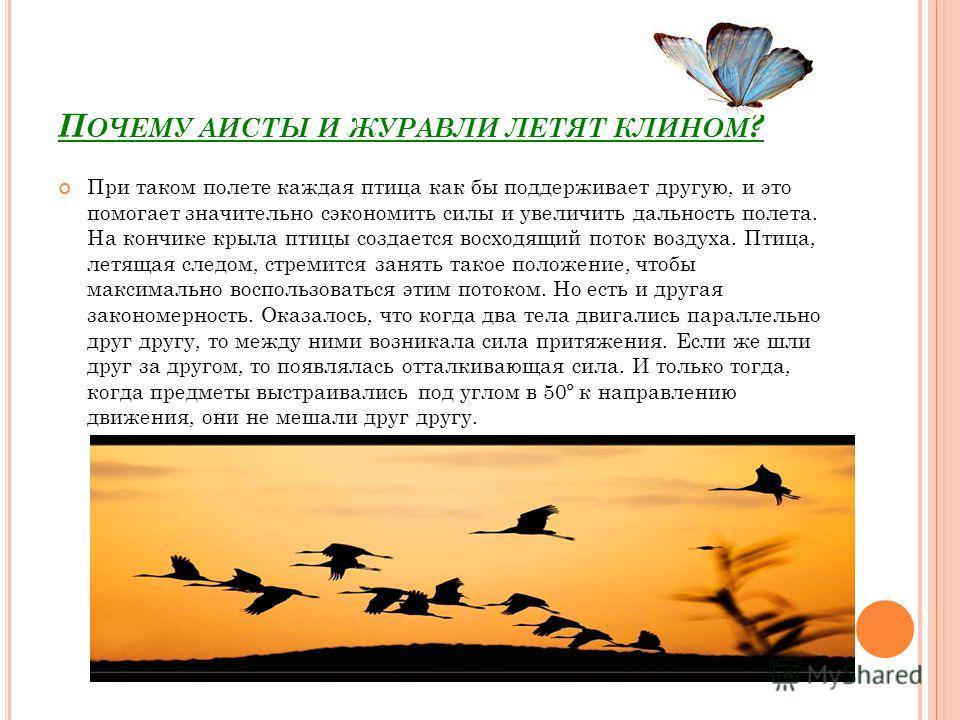 П ОЧЕМУ АИСТЫ И ЖУРАВЛИ ЛЕТЯТ КЛИНОМ ? При таком полете каждая птица как бы поддерживает другую, и это помогает значительно сэкономить силы и увеличить дальность полета. На кончике крыла птицы создается восходящий поток воздуха. Птица, летящая следом