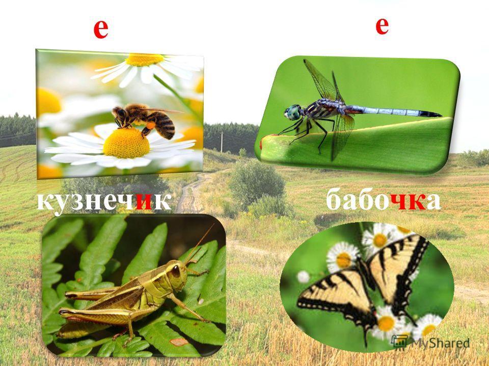 пчела бабочка стрекоза кузнечик