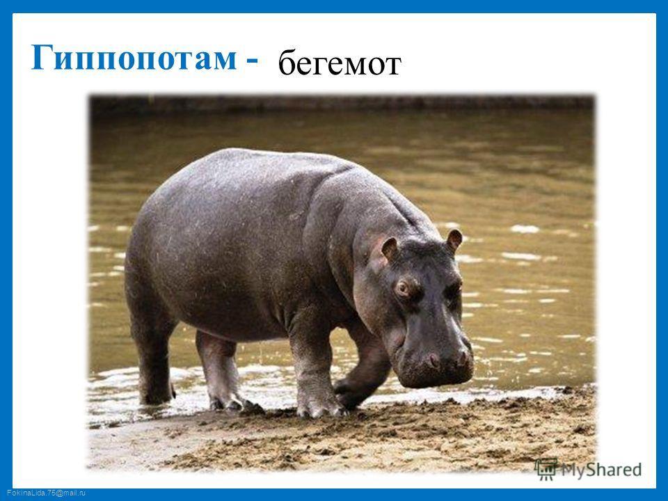 FokinaLida.75@mail.ru Гиппопотам - бегемот