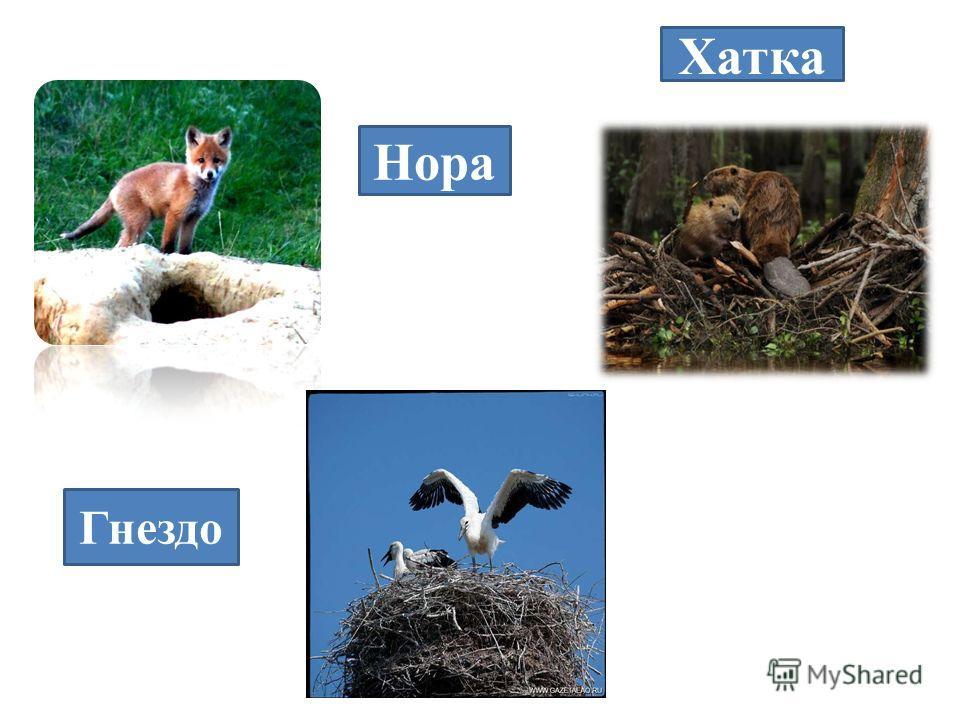 Нора Хатка Гнездо