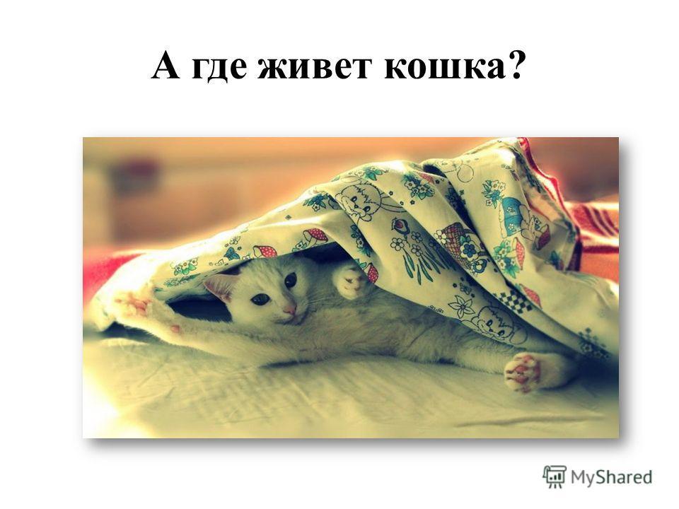 А где живет кошка?
