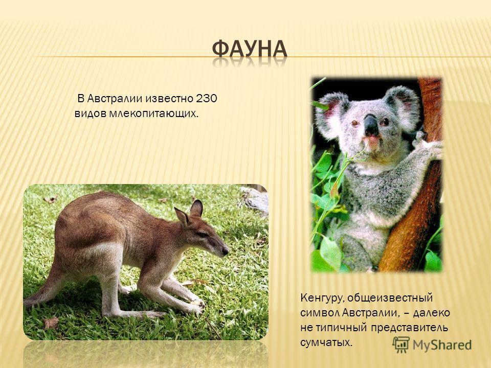 В Австралии известно 230 видов млекопитающих. Кенгуру, общеизвестный символ Австралии, – далеко не типичный представитель сумчатых.