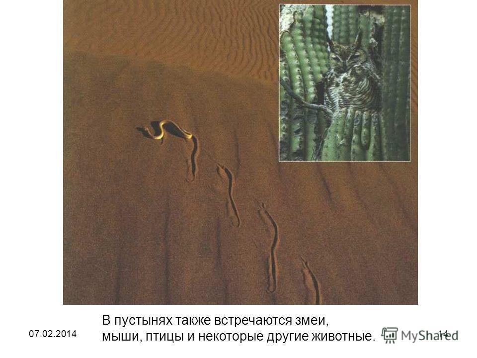 В пустынях также встречаются змеи, мыши, птицы и некоторые другие животные. В пустынях также встречаются змеи, мыши, птицы и некоторые другие животные. 07.02.201414