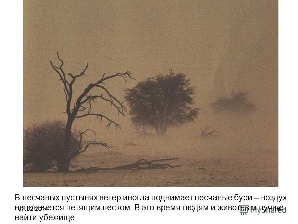 В песчаных пустынях ветер иногда поднимает песчаные бури – воздух наполняется летящим песком. В это время людям и животным лучше найти убежище. 07.02.201416
