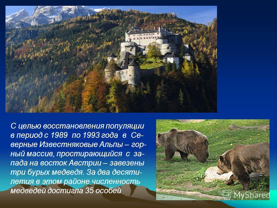 С целью восстановления популяции в период с 1989 по 1993 года в Се- верные Известняковые Альпы – гор- ный массив, простирающийся с за- пада на восток Австрии – завезены три бурых медведя. За два десяти- летия в этом районе численность медведей достиг