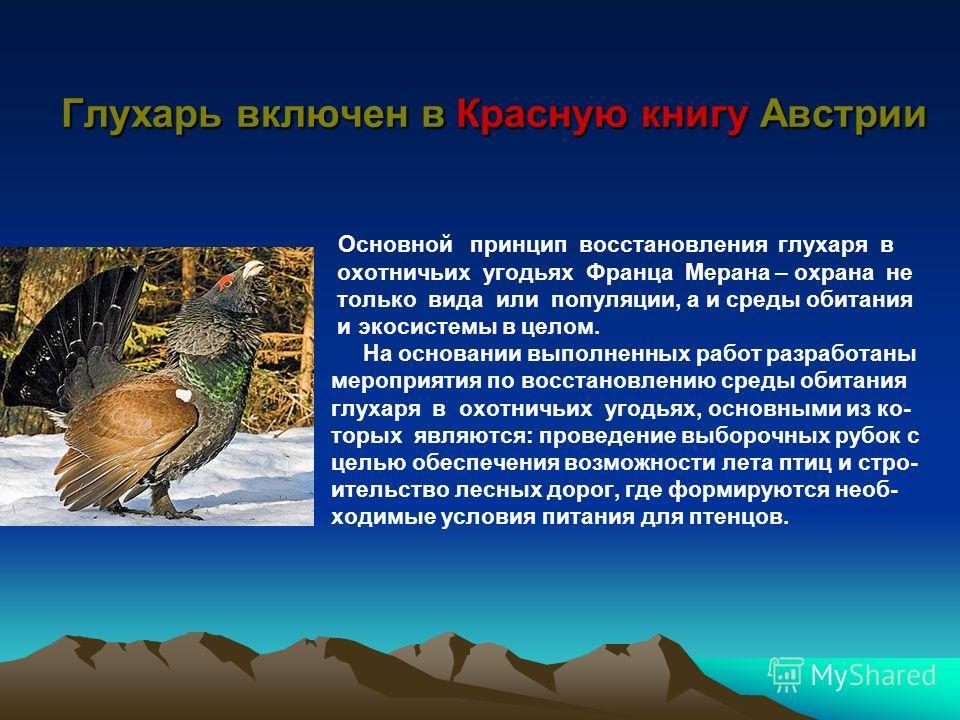 Глухарь включен в Красную книгу Австрии Основной принцип восстановления глухаря в охотничьих угодьях Франца Мерана – охрана не только вида или популяции, а и среды обитания и экосистемы в целом. На основании выполненных работ разработаны мероприятия