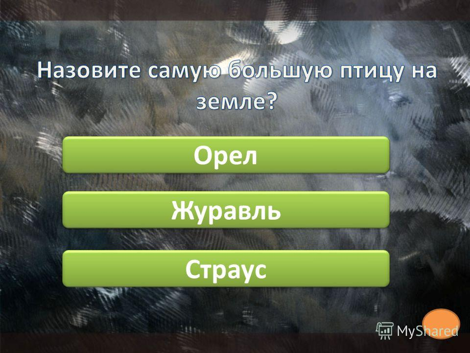 Орел Страус Журавль