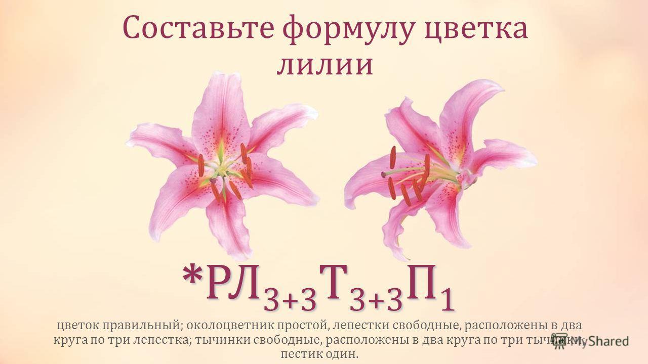 Составьте формулу цветка лилии цветок правильный; околоцветник простой, лепестки свободные, расположены в два круга по три лепестка; тычинки свободные, расположены в два круга по три тычинки; пестик один. *РЛ 3+3 Т 3+3 П 1