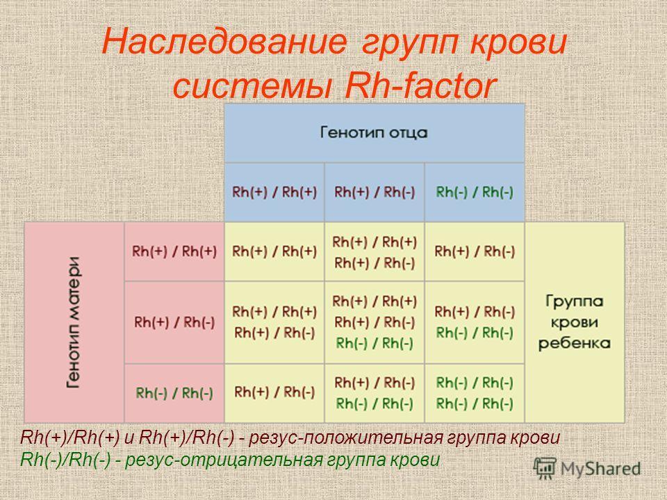 Наследование групп крови системы Rh-factor Rh(+)/Rh(+) и Rh(+)/Rh(-) - резус-положительная группа крови Rh(-)/Rh(-) - резус-отрицательная группа крови