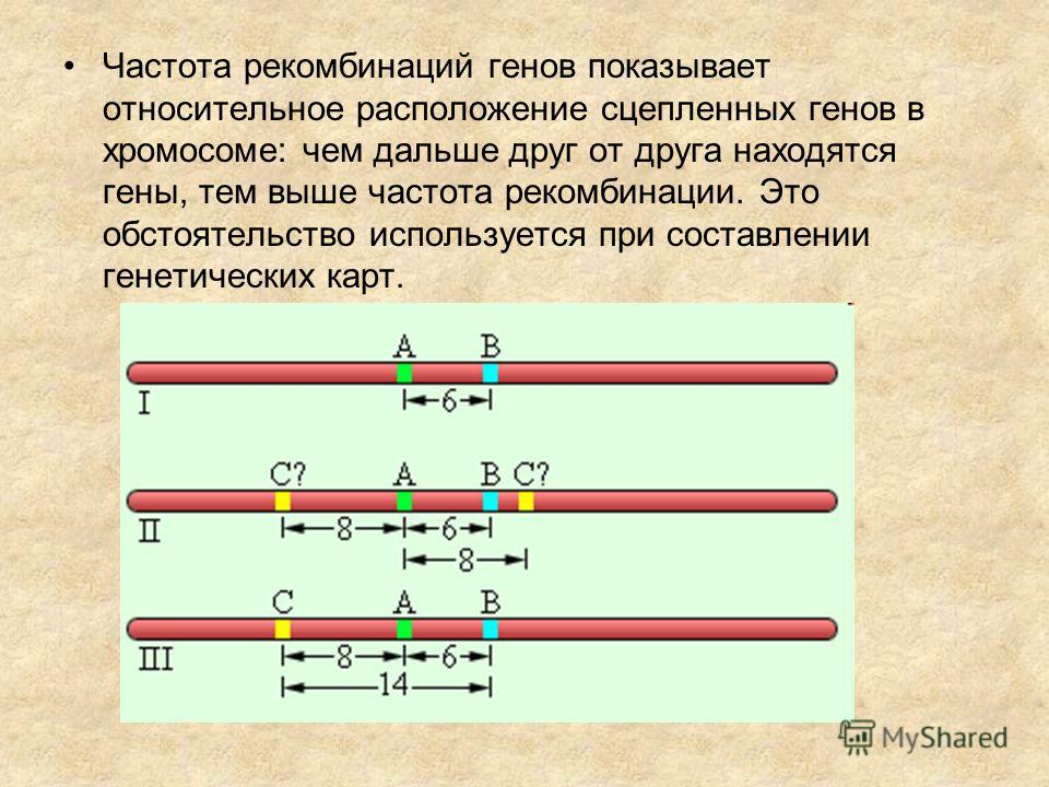 Частота рекомбинаций генов показывает относительное расположение сцепленных генов в хромосоме: чем дальше друг от друга находятся гены, тем выше частота рекомбинации. Это обстоятельство используется при составлении генетических карт.