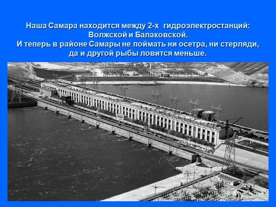 Наша Самара находится между 2-х гидроэлектростанций: Волжской и Балаковской. И теперь в районе Самары не поймать ни осетра, ни стерляди, да и другой рыбы ловится меньше.