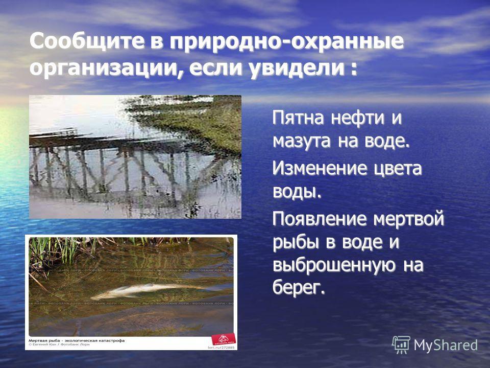 Сообщите в природно-охранные организации, если увидели : Пятна нефти и мазута на воде. Пятна нефти и мазута на воде. Изменение цвета воды. Изменение цвета воды. Появление мертвой рыбы в воде и выброшенную на берег. Появление мертвой рыбы в воде и выб