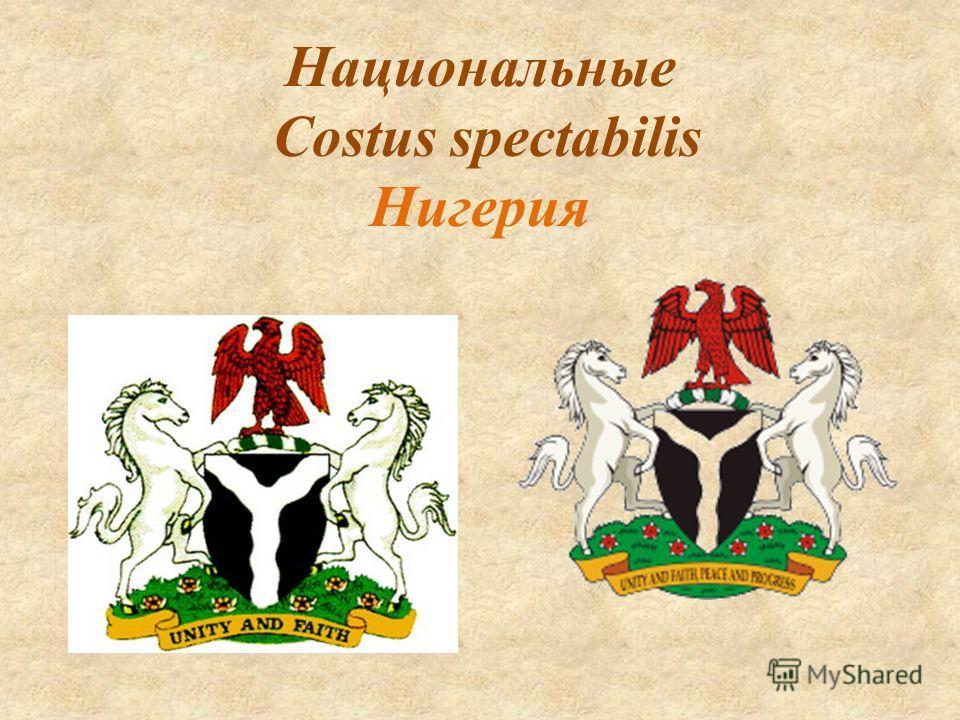 Национальные Costus spectabilis Нигерия