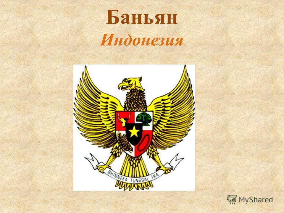 Баньян Индонезия